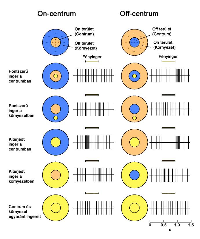 tabletták, amelyek helyreállítják a látást okapin szemcsepp